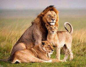 Wildlife Safaris in Rwanda