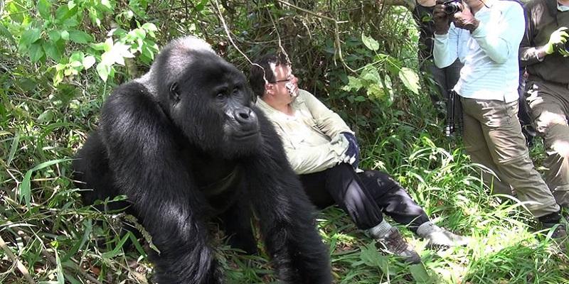 4 Day Bwindi Gorilla