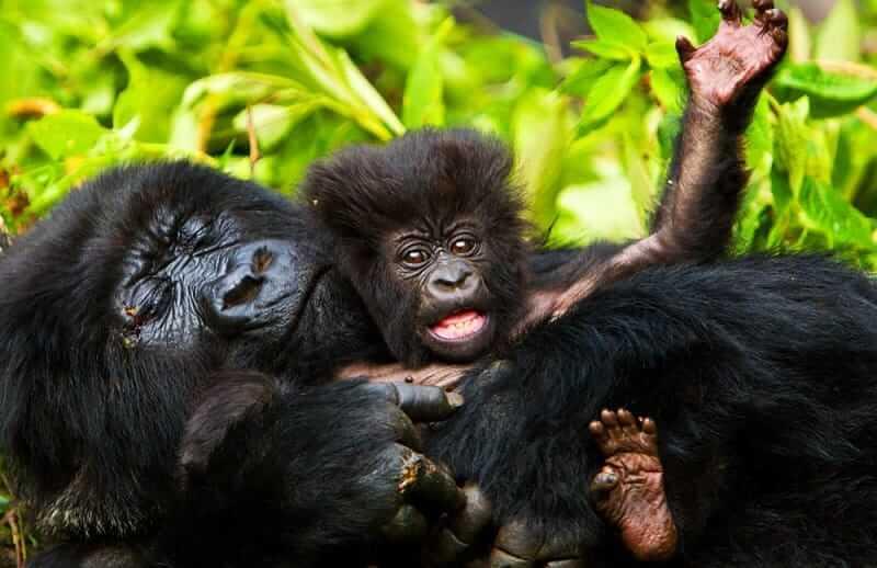 7 Days Uganda Gorillas and Wildlife