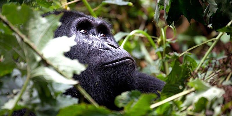 6 Days Rwanda Uganda Gorilla Tour