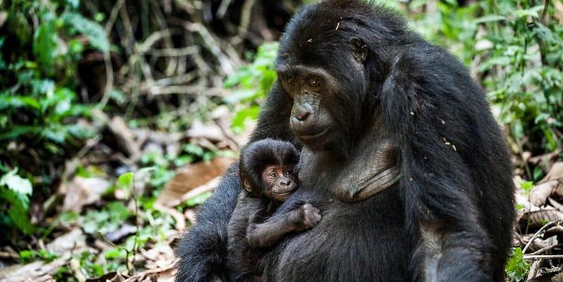 4 Days Rwanda Double Gorilla Trekking & Cultural Tour