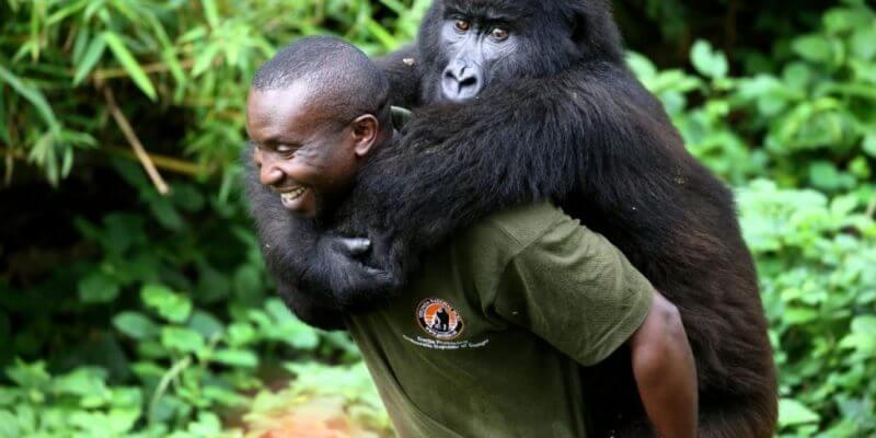 2 Days Congo Gorilla Tour