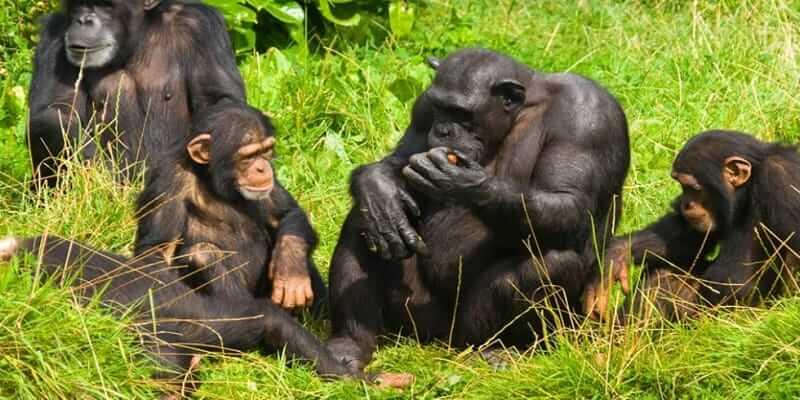9 Days Rwanda Safari, Gorillas & Wildlife