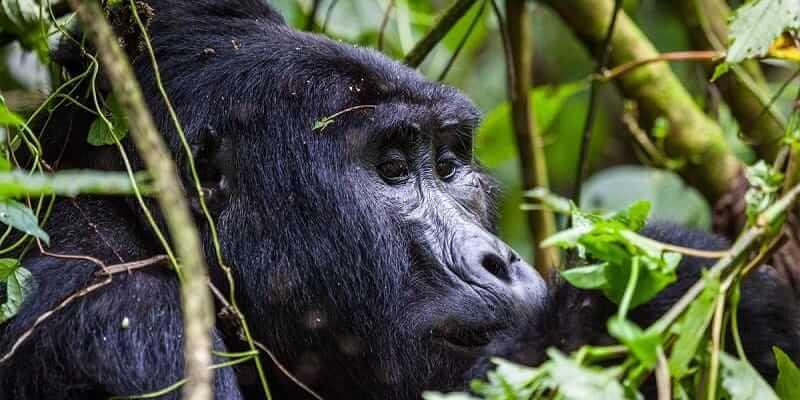 5 Days Rwanda Gorilla Trekking