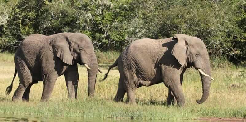 2 Days Akagera National Park Tour
