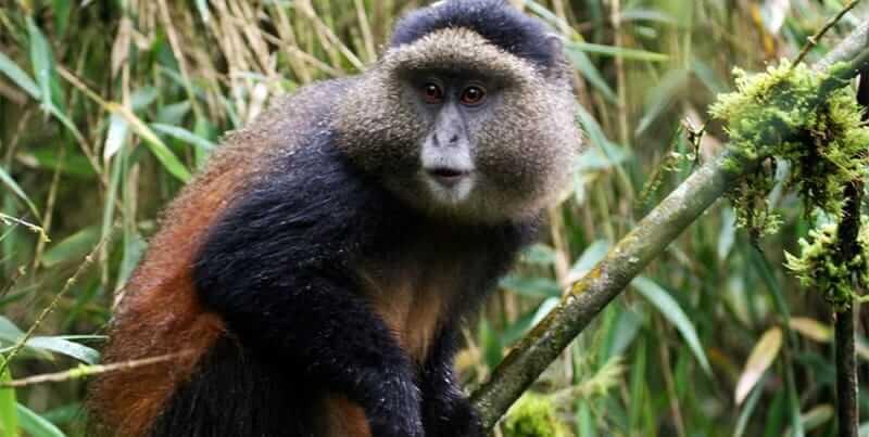 12 Days Uganda Rwanda Gorilla And Wildlife Safari