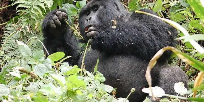 Cost Of Rwanda Gorilla Permits