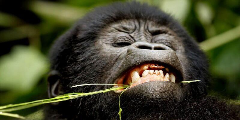 Gorilla Trekking Age Limit