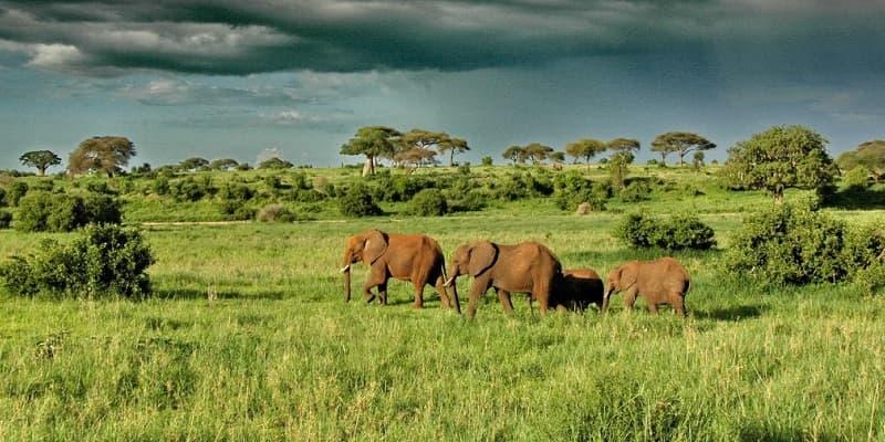Top 7 Reasons Why You Should Visit Uganda
