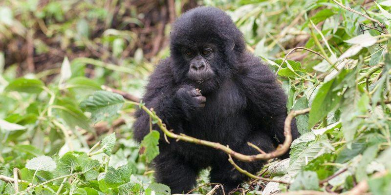 10 Days Rwanda Gorilla Tracking