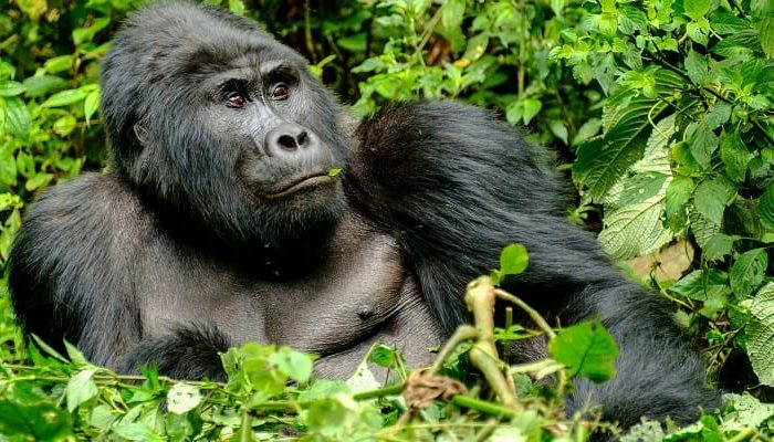 1 Day Uganda Gorilla Tour from Kigali