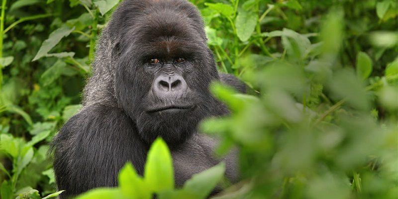 4 Days Rwanda Gorilla Safari