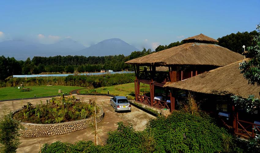 Da Vinci Gorilla Lodge