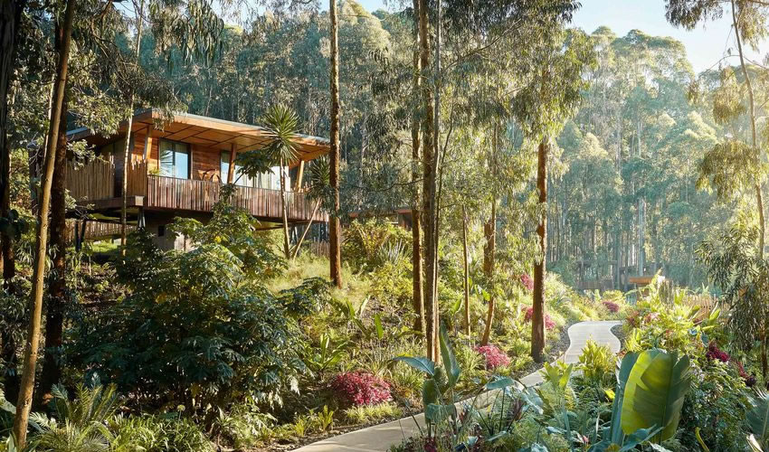One and Only Gorilla Nest Lodge