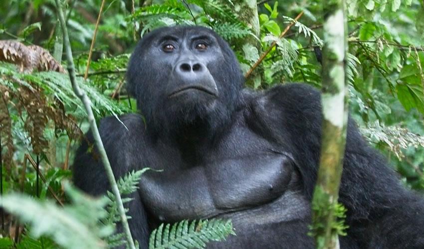 8 Days Luxury Rwanda Gorilla & Wildlife Safari